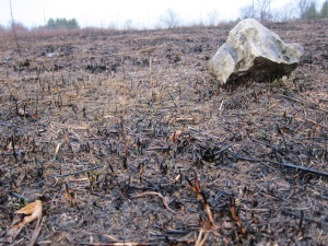 A rock from a different age still lingers on the burnt, wet prairie.