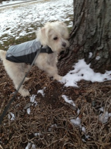Chuck models his winter training gear, a grey nylon racing top with dark grey fleece trim with velcro stays.