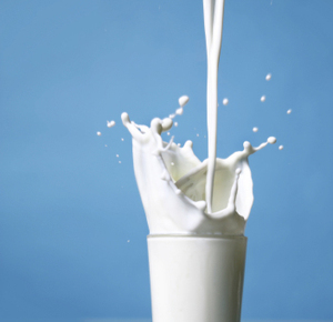 Lactose can make you feel like you're going to explode. And cows are to blame.