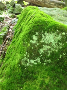 Moss is patient. It mindlessly seeks out the places where it best belongs.