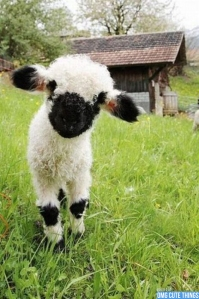 This rare breed is called the Rorschach Sheep. What do you see in its wool?