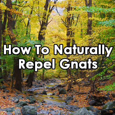 How-To-Naturally-Repel-Gnats