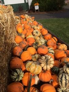 Mo Pumpkins