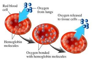 oxygen_hemoglobin
