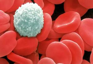white-blood-cell-amungst-red