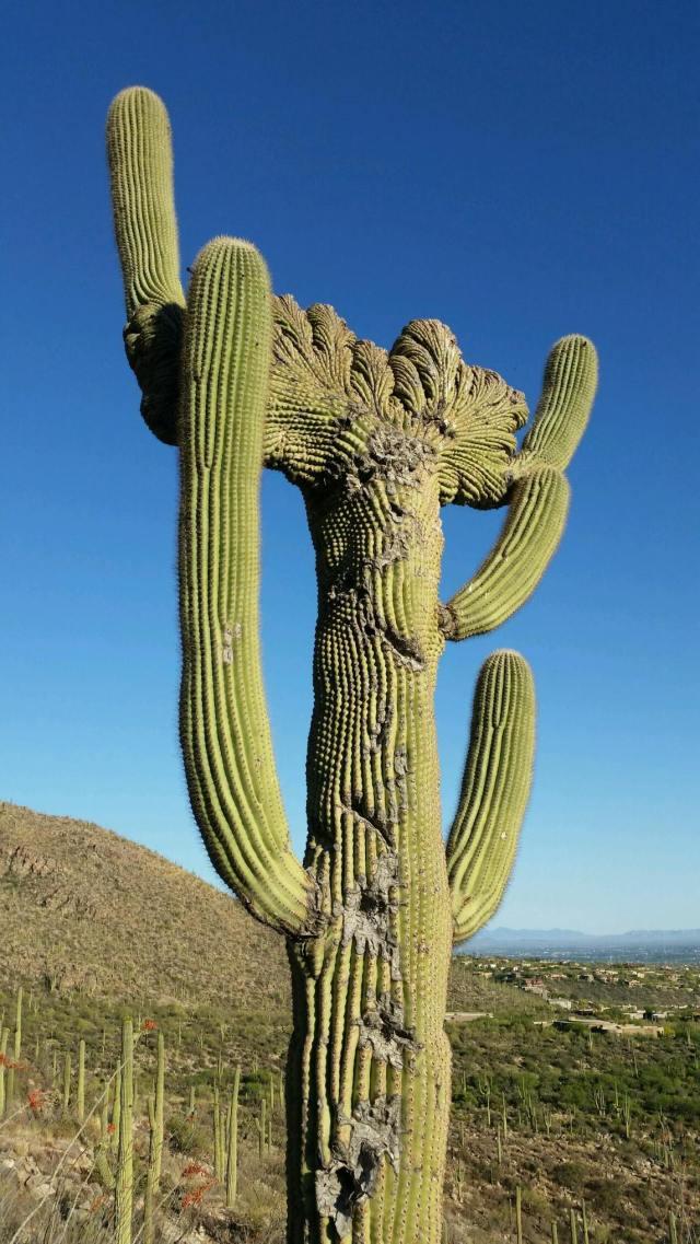 Saguaro Face.jpg