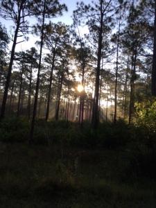 Sunrise woods