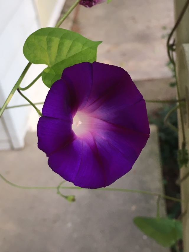 Purple Flower.jpg