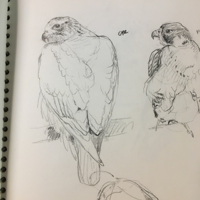 gyr-and-peregrine