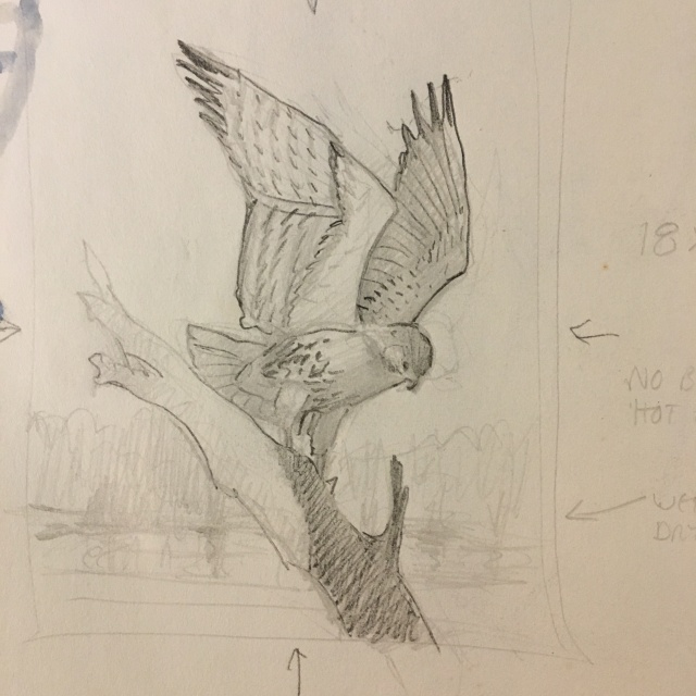 Red Tailed Sketch.jpg