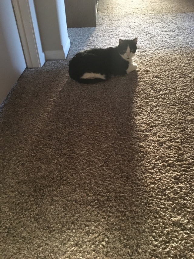 Shadow cat.jpg