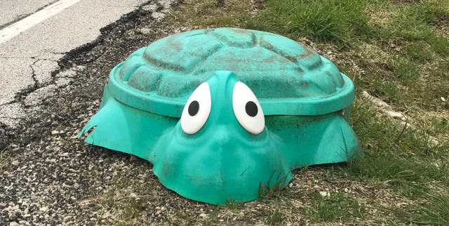 Plastic Turtle.png