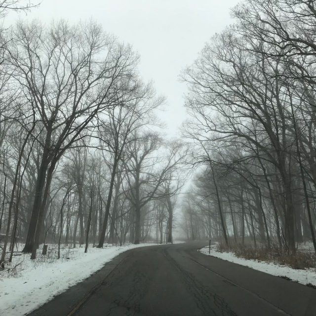 Trees in Fob.jpg
