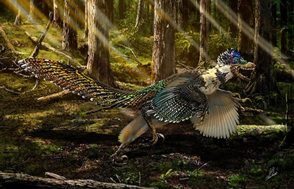 Feathered Raptor.jpg