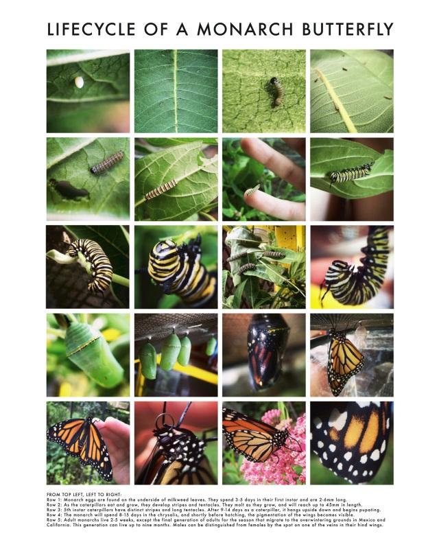 MonarchPoster