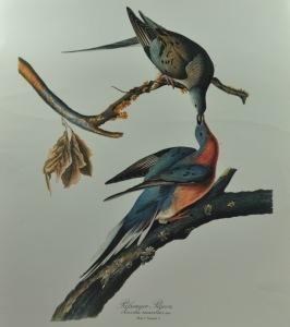 Pass-Pigeon